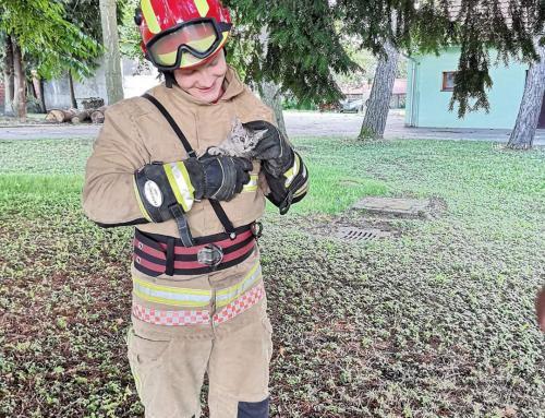 Simpatična intervencija: Ludbreški vatrogasci pomogli malenom mačiću