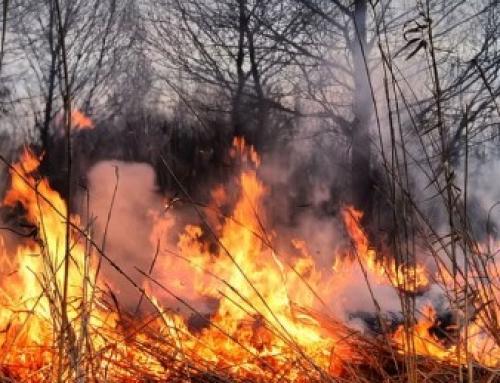 Porast broja požara – oprez prilikom spaljivanja korova!
