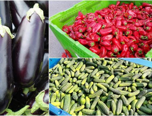 Poljoprivrednici, želite proizvoditi povrće za Podravku? Javite se u PZ 'Ludbreški kraj'