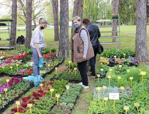 Krenula prodaja cvijeća na Otoku mladosti