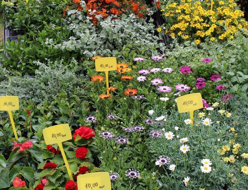 Tržnica cvijeća i ovog vikenda na Otoku mladosti