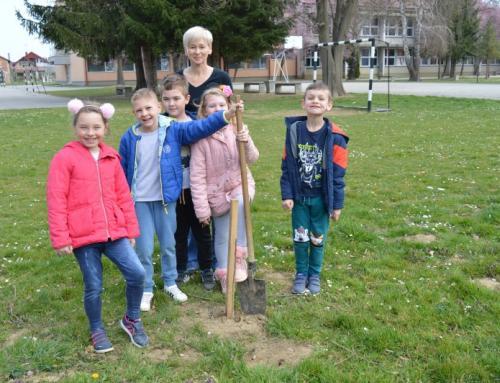 """Planinarska skupina OŠ Ludbreg uključila se u akciju """"Zasadi stablo, ne budi panj"""""""