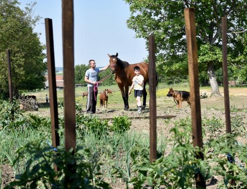 Iz ljubavi prema konjima